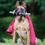 Group logo of Teach Your Dog Tricks